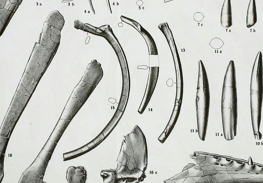 Spinosaurus_holotype.thumb.jpg.19cf98fda0652ace073c12013a8b225a.jpg