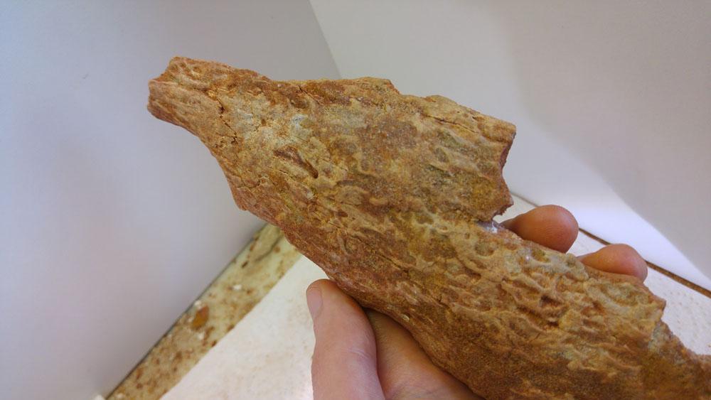 elosuchus02.jpg