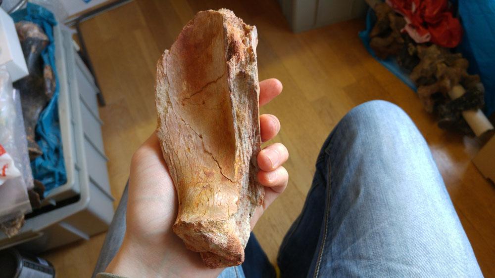 elosuchus05.jpg
