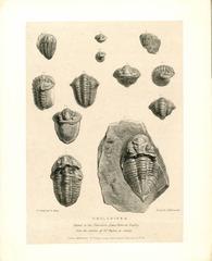 Trilobite Diagram