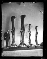 Dinosaur Legs