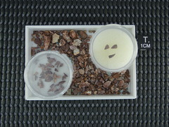 Triassic teeth & misc items