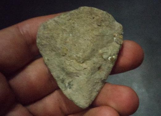 591b2d2a80121_Fossils5a.jpg.fda8f0ff210668926cf8958f67aaf501.jpg