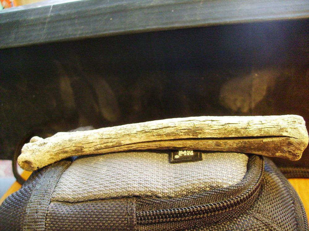 Antelope metapodial 1.JPG