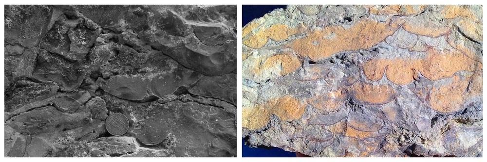 Algae-pahoeid-comparison.thumb.jpg.24aa7687cc71b8dc6dbacff9973c51da.jpg