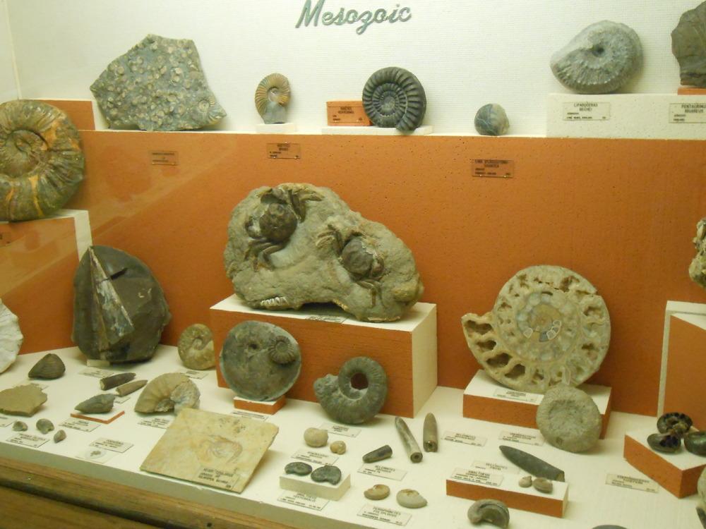 MUS-SouthDakotaSchoolMinesMuseum35.thumb.JPG.5fd363037527a3dbb3b1328a8ec6aee1.JPG