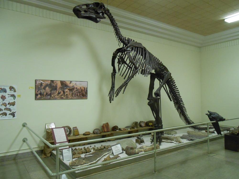 MUS-SouthDakotaSchoolMinesMuseum6.thumb.JPG.c87007c1ec266e6e4ab246f46a2ab223.JPG