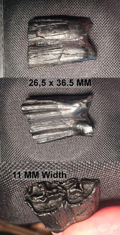 SmallHorseTooth.thumb.jpg.c63ae3cc1b73e31b88054c1546bfe2cc.jpg