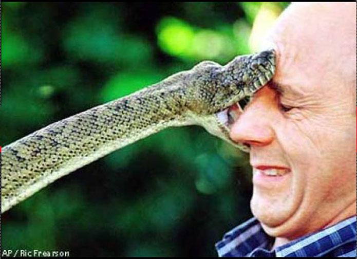 amythestine_python.jpg
