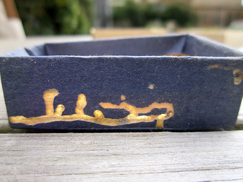 insect damage to matchbox.jpg