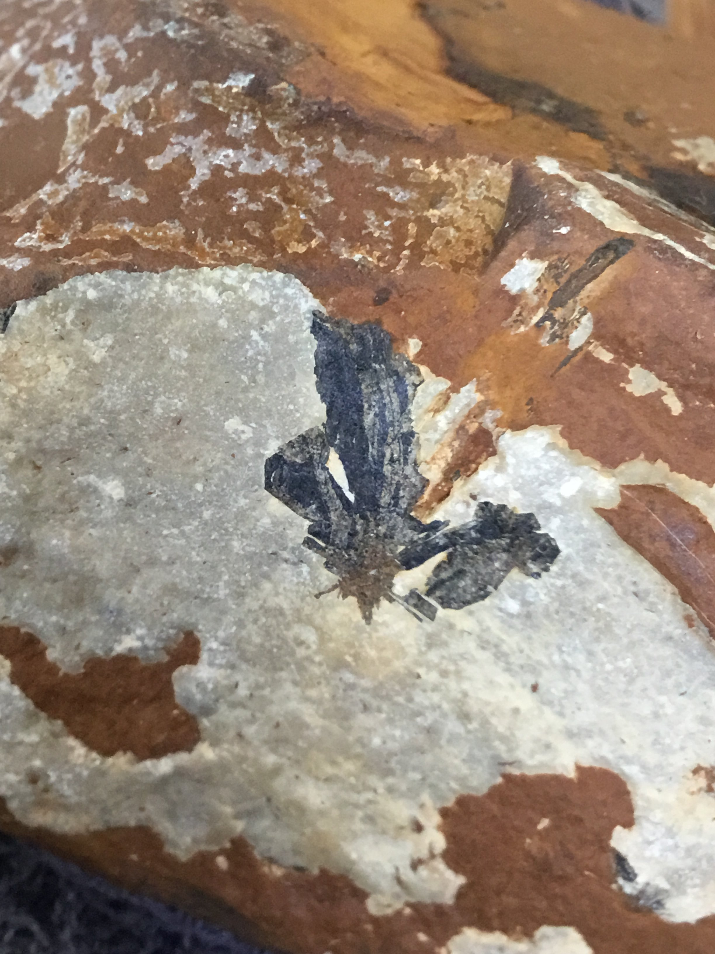 Can't identify this  - Fossil ID - The Fossil Forum
