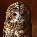 Owlinfinity