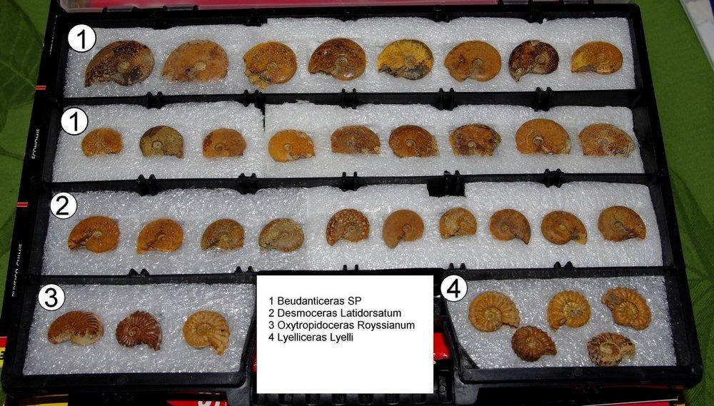 ammonites-troyes-2-low.JPG