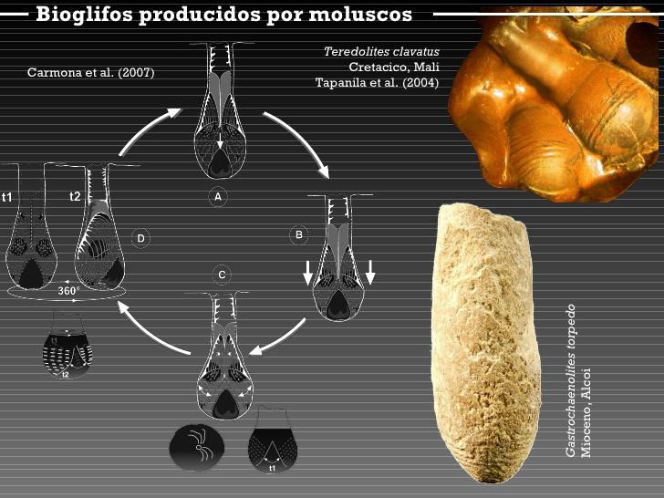 bioglifos-12-728.jpg.28ba7004a55307b736584120661b1aea.jpg
