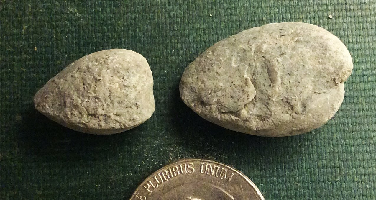 Bivalve internal molds from Brechin, Ontario