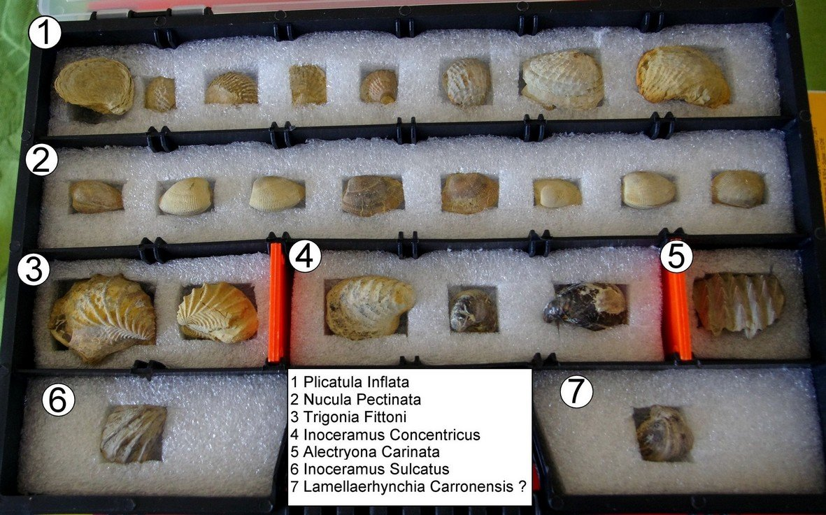 Bivalves from the albian clay of Troyes
