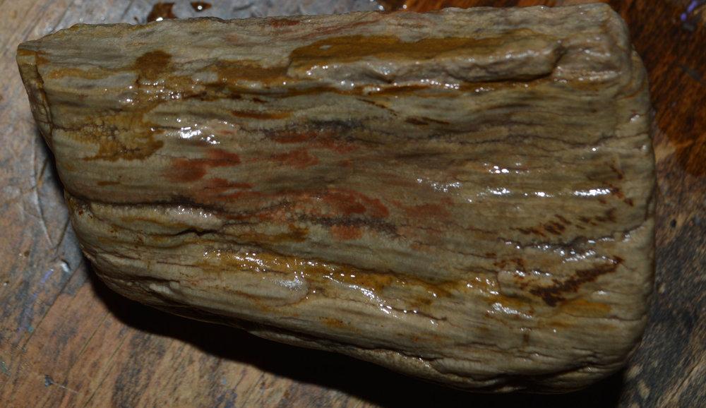 musclefossil6.jpg