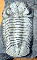 Middle Devonian Hamilton Group Fossils