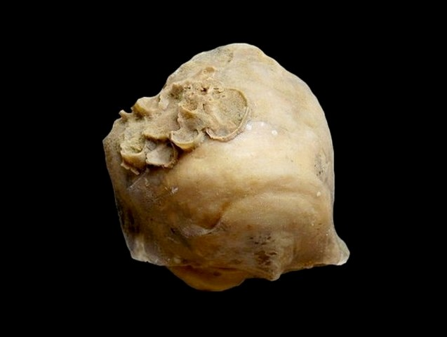 pycnodonte-biauriculata-saint-gemme-17.jpg.385cc44814a351a758bbaf13590329a3.jpg