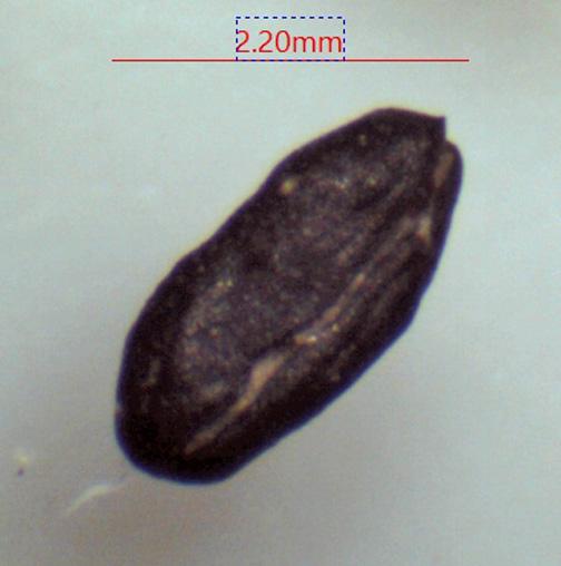 sandown seed 19.jpg