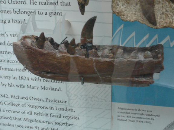 Megolosaurus jaw.jpg
