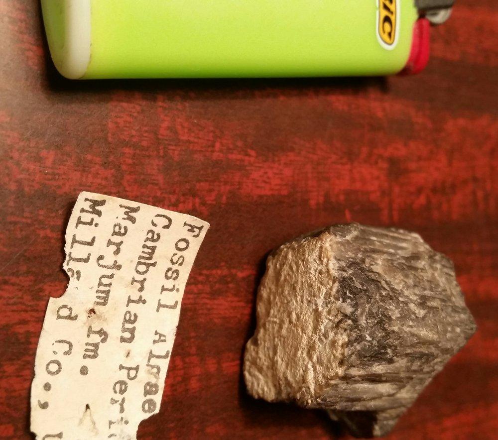 Algae.thumb.jpg.e051a3105db54d17e6e0538504b05cb7.jpg