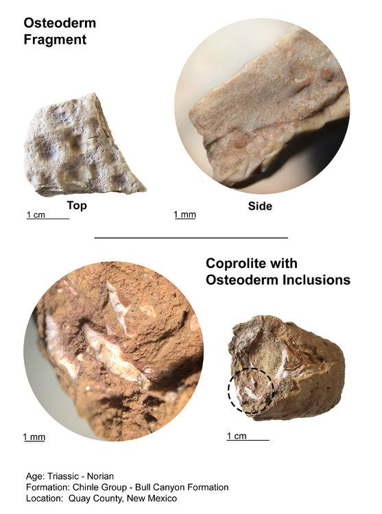 Coprolite-Phytosaur-Osteoderm-Inclusions-Views.jpg