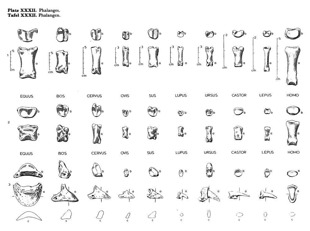 Phalanges.thumb.jpg.1e874ba3a49d0b8df125de91ba9ab6f0.jpg