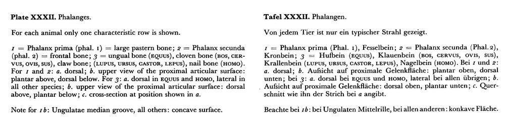Phalanges_text.thumb.jpg.8e9cd29fbedc81eb0f646a8ad18ac267.jpg