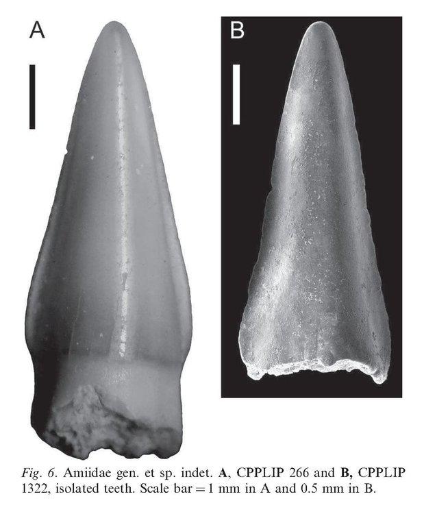 2012MartinellietalAmiidaeGrupoBauru.thumb.jpg.6985f2bc1b11c302182a442f06b02397.jpg