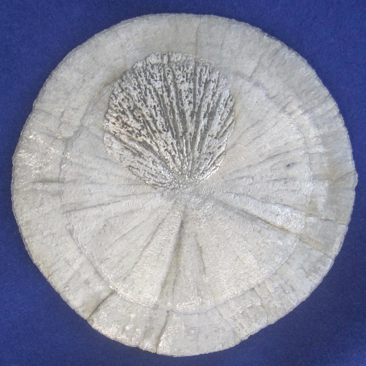Metal Disk with Shell #1 Pic1 Front.jpg