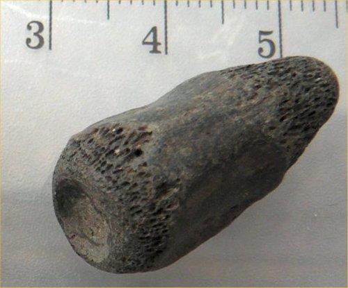 Croc toe bone.jpg