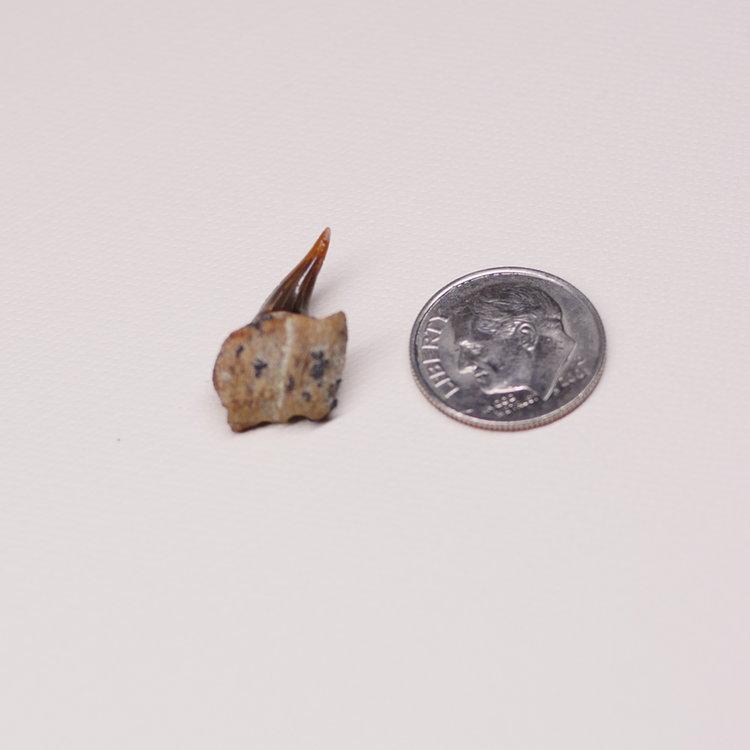 11102017 Meg Shark Tooth Digging STH_125.JPG
