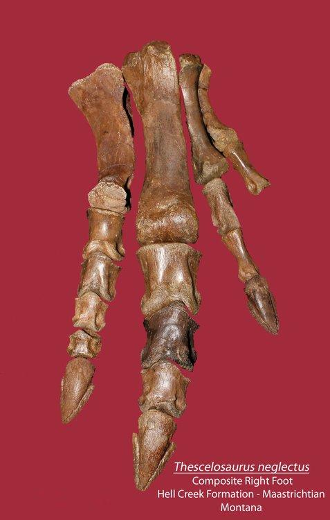 Foot1.thumb.jpg.92a1c16a8c282a4fe125b3e58c4ba992.jpg