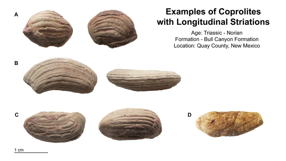 Triassic_Furrowed_Coprolites.jpg