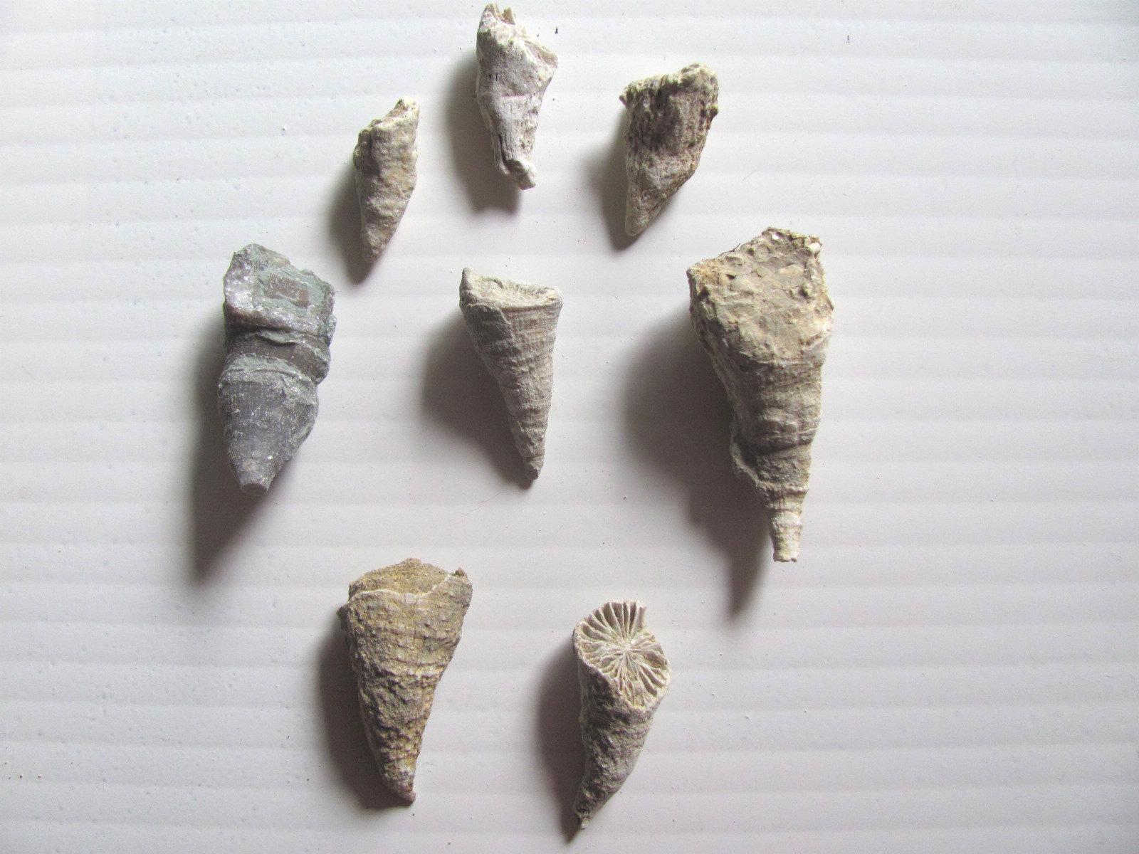 Horn Coral Group.jpg