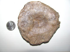 Ichthyosaur Vertebra a.jpg