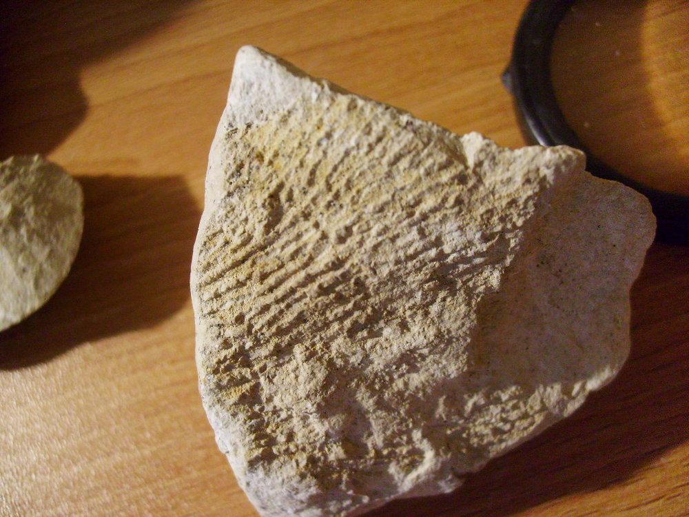 Early Cretaceous sponge 4.JPG