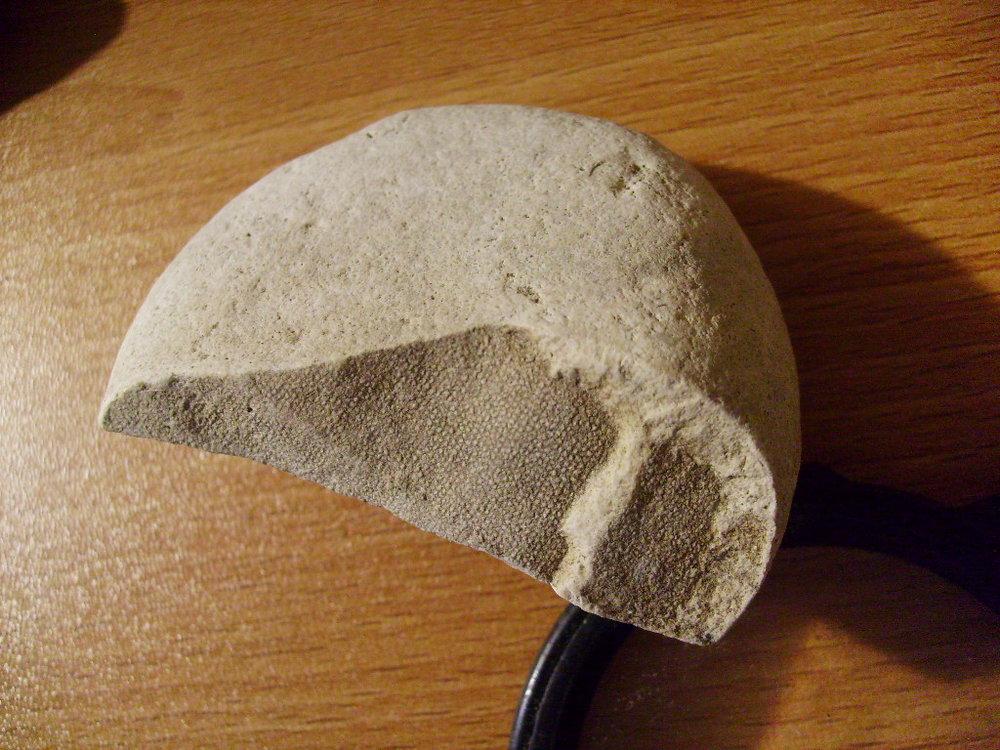 Paleocene sponge 1.JPG