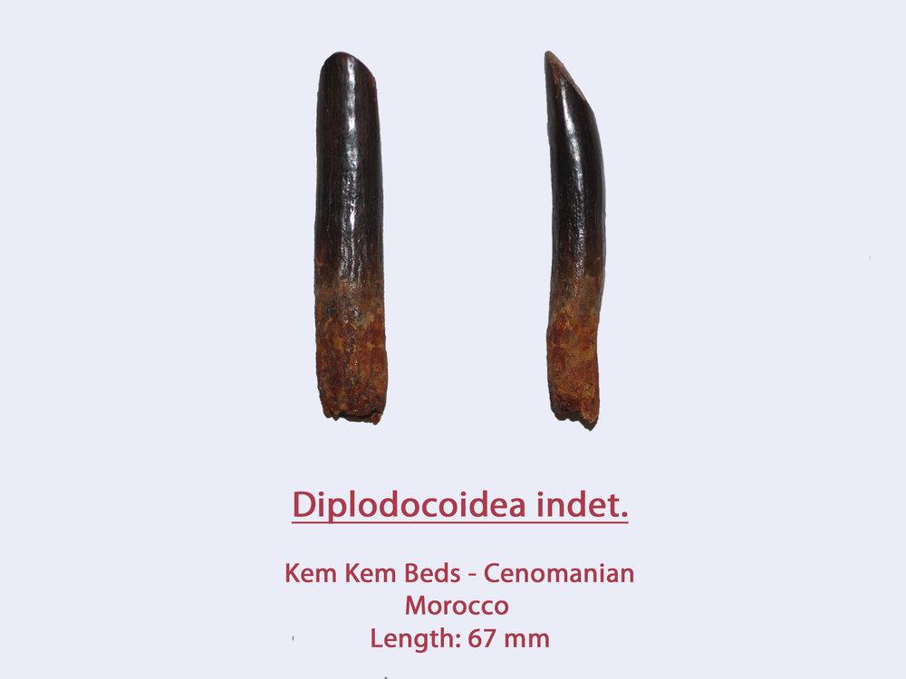 DiploMorph2.thumb.jpg.bfebe585bf31be364084921894405ace.jpg