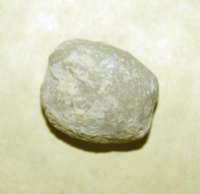 Heteraster texanus Echinoid a.jpg
