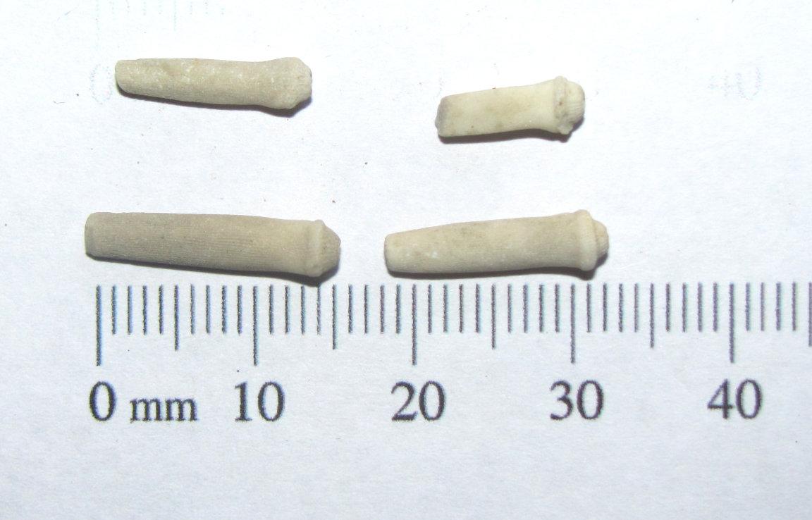 Fossil Sea Urchin Spines.JPG