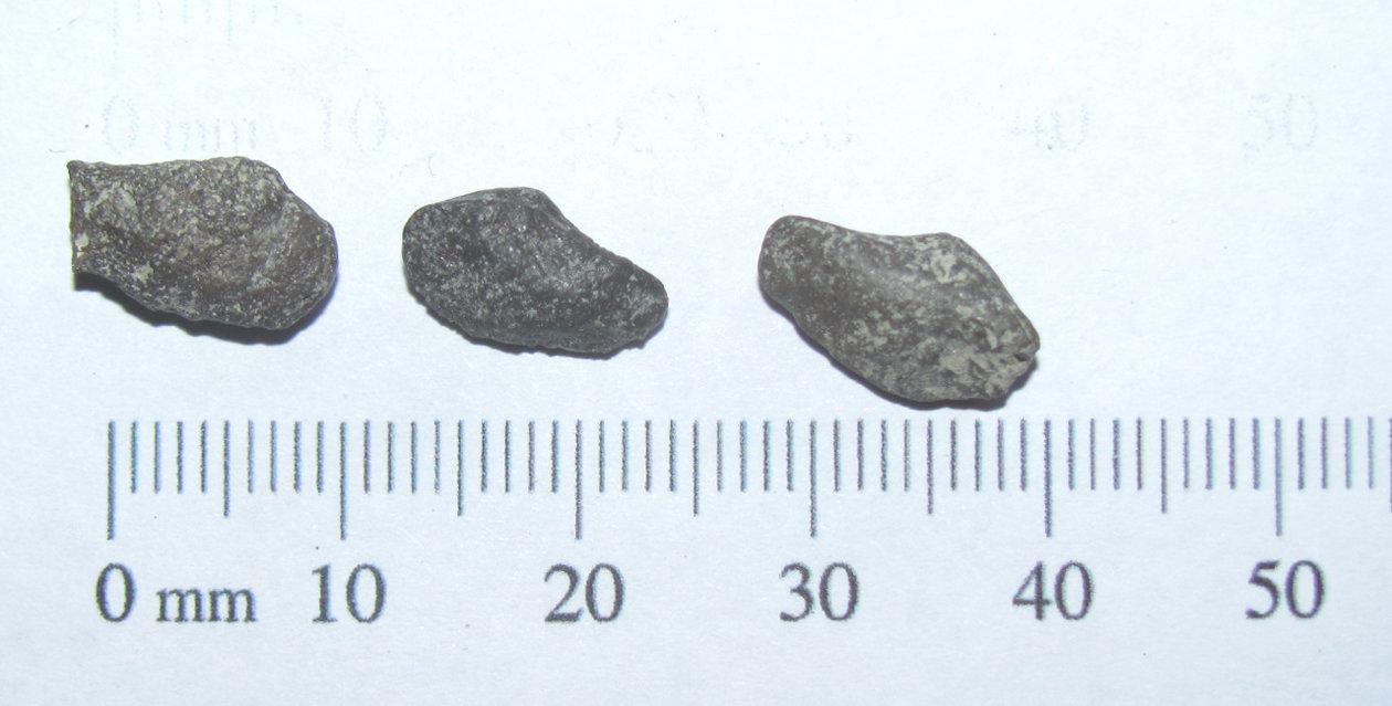 Clam Cast Fossils b.JPG