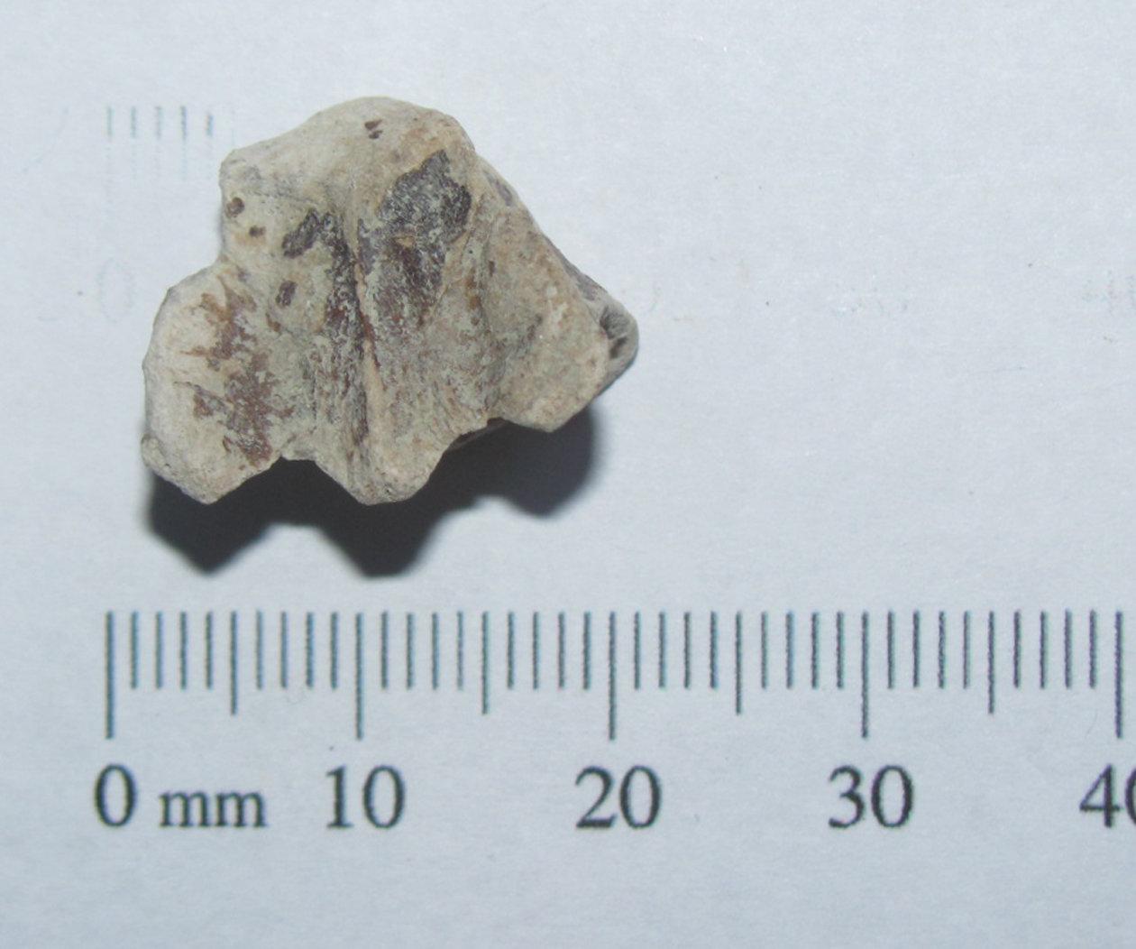 Bonita Nose Fossil a.JPG