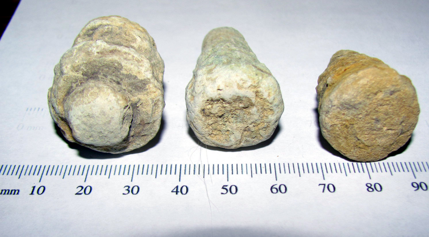 Conostichus - Sea Anemone Burrow Fossils 1.jpg