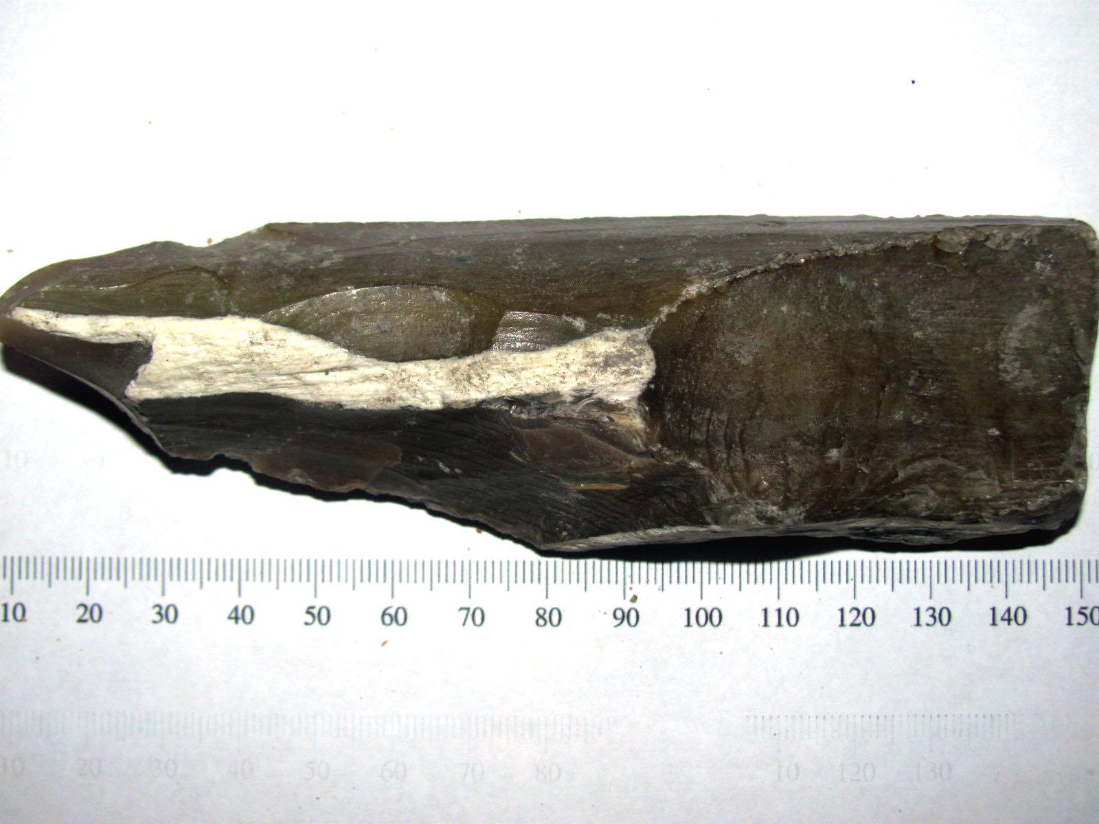 Petrified Wood - Nebraska 1.JPG