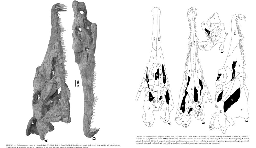 redondasaurus.thumb.png.43a658b79d3ce00115855c728b031636.png