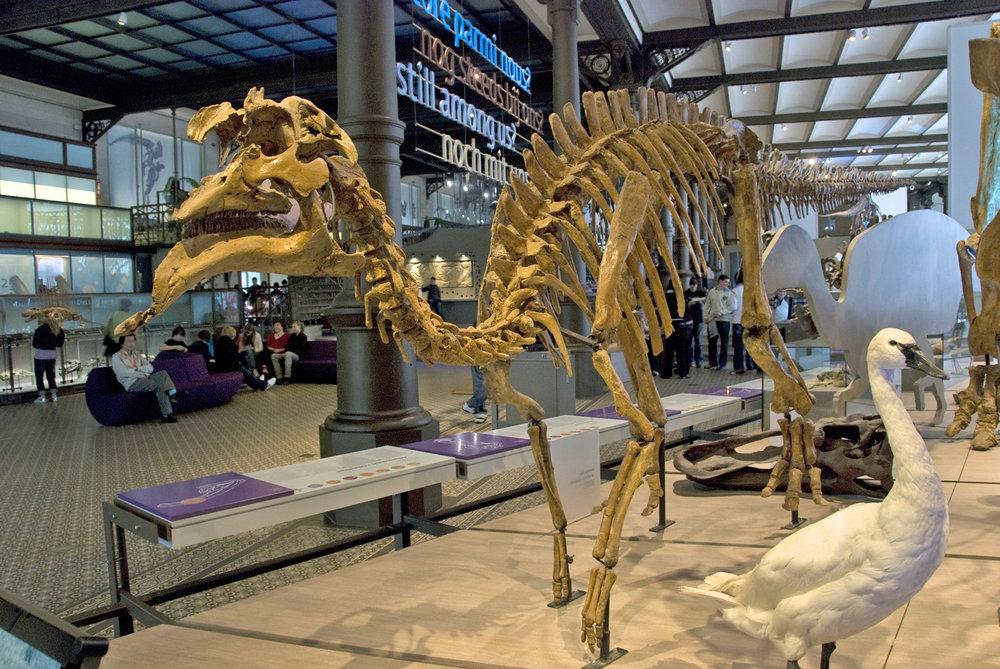 AmurosaurusBrussels.thumb.jpg.650d6acb3084aa8acfc9559286831349.jpg
