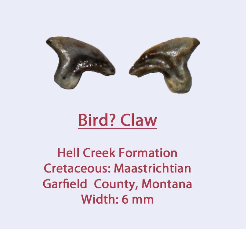 ClawS1.thumb.jpg.d52497b6124d5c4b0ae09ba24b583c65.jpg