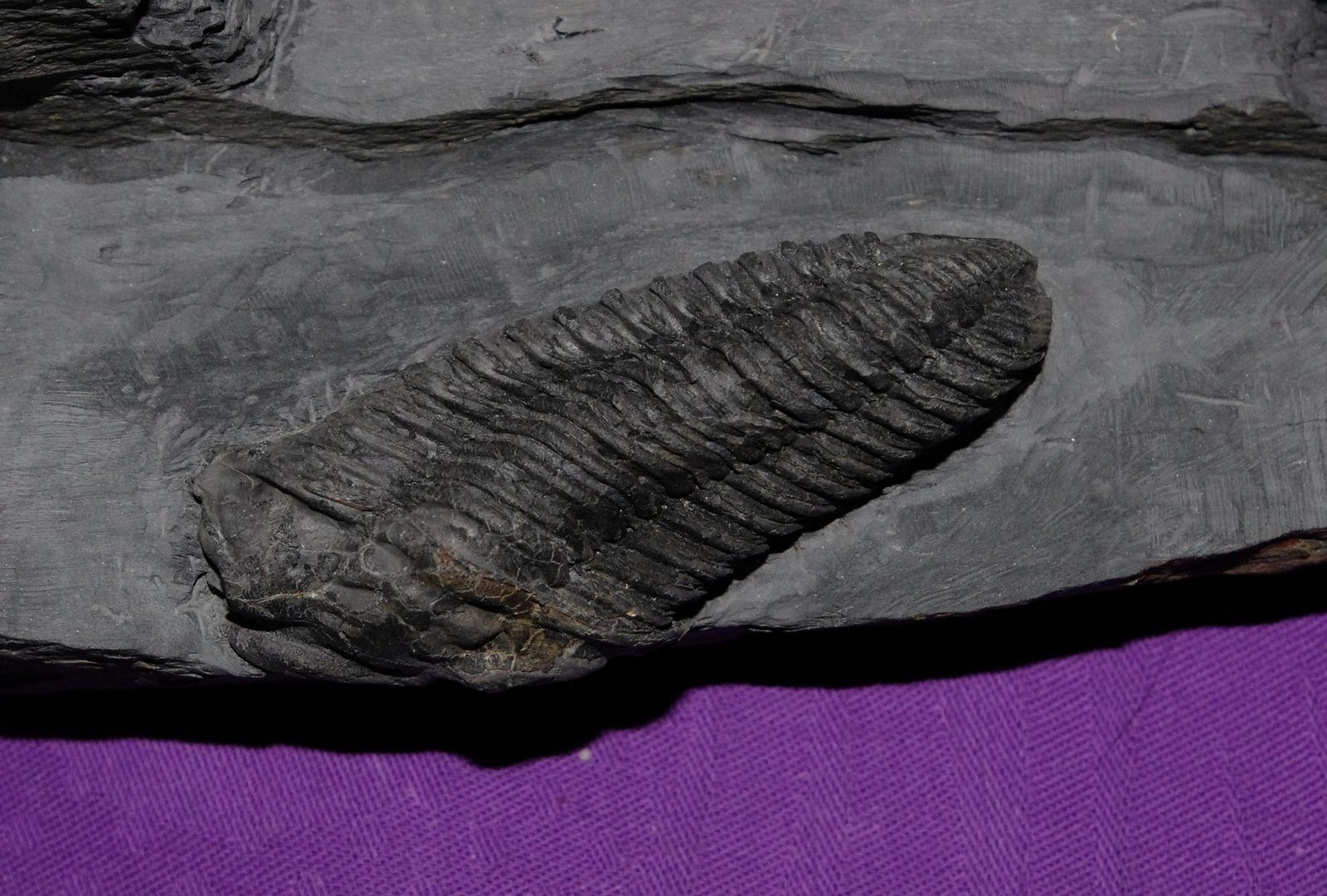 large.detail-second-2.JPG.70dafaa4a5767f